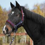 Kerbl Pferde Halfter Dexter mit Fleeceunterlage