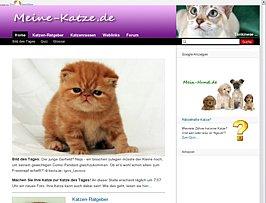 Katzen - Alles rund um das geliebte Haustier